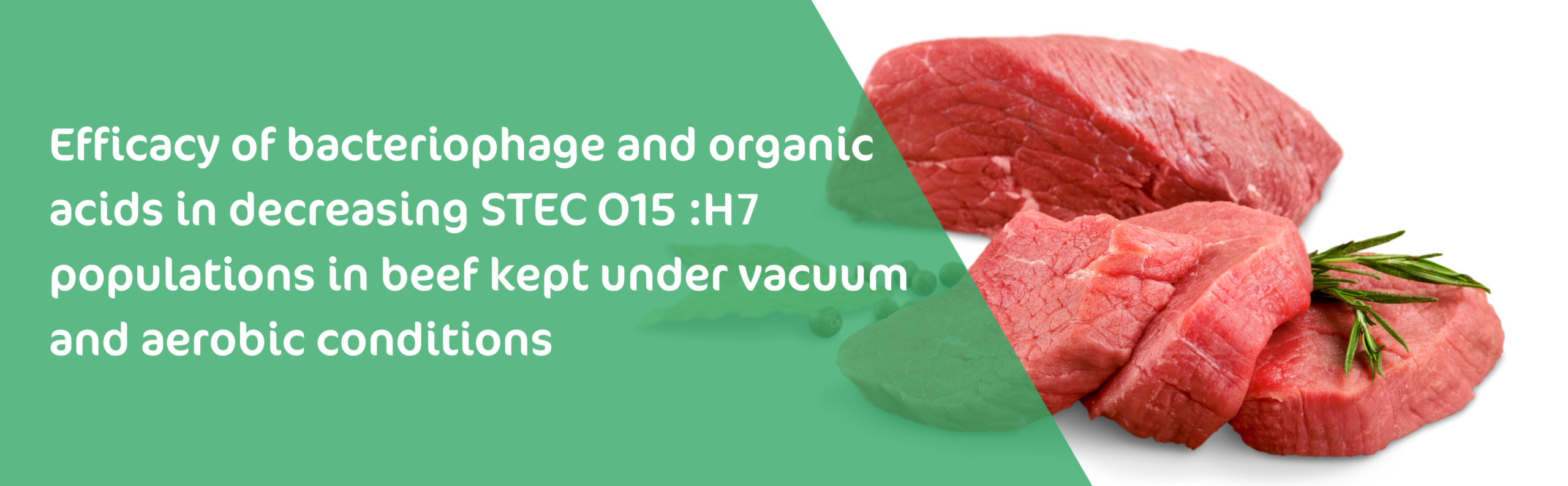 Efficacy of bacteriophage and organic acids in decreasing STEC O157:H7 populations in beef kept under vacuum and aerobic conditions